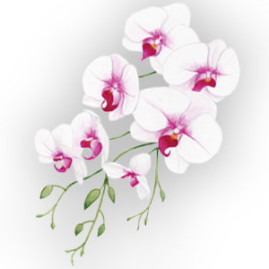 Hand Painted Orchids